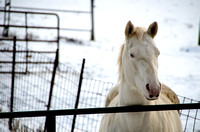 Jan. 22, a white horse on Mll Pond Road, Byron